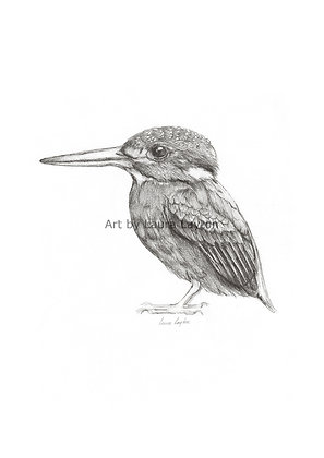 Kingfisher - Art Print