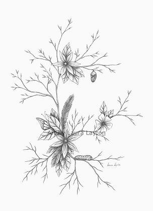 Butterfly Life - Art Print