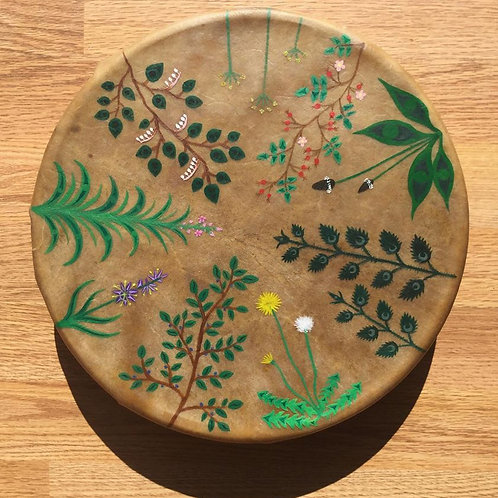Native Plant Drum
