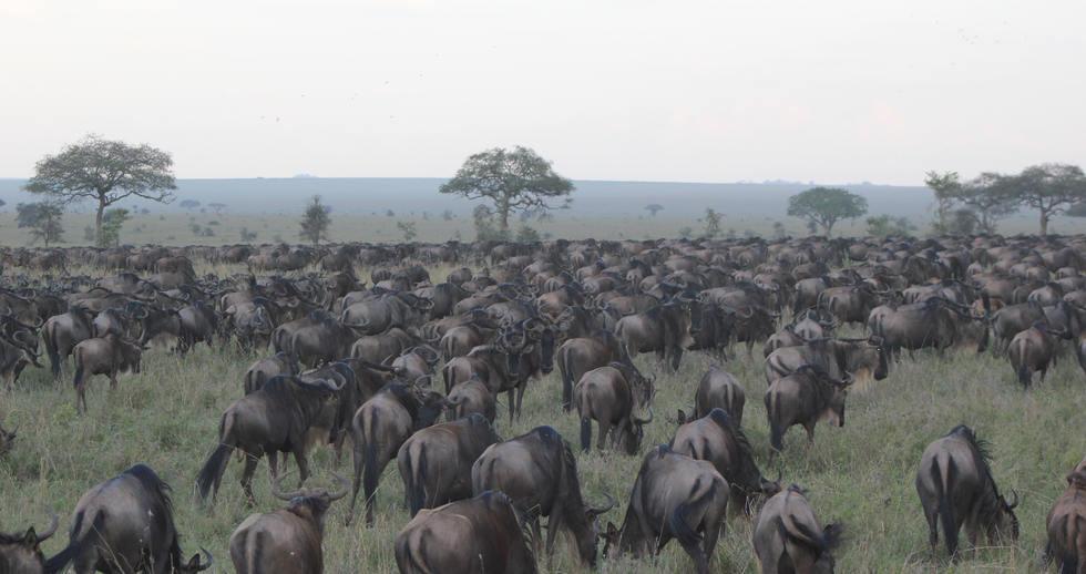 serengeti safari zanzibar (5).JPG