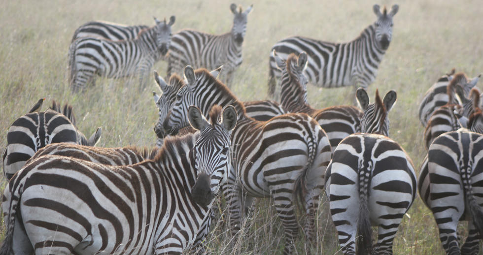 serengeti safari zanzibar (4).JPG