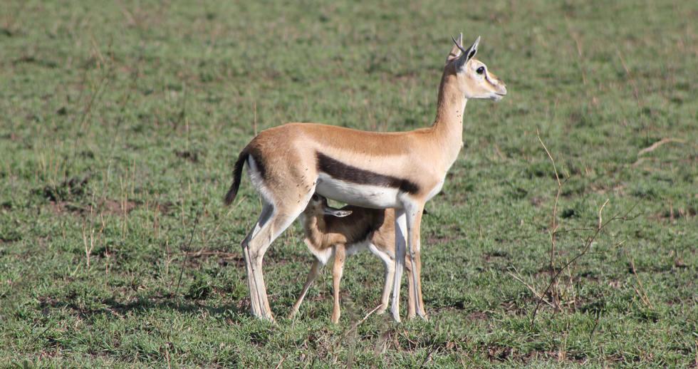 serengeti safari zanzibar (3).JPG