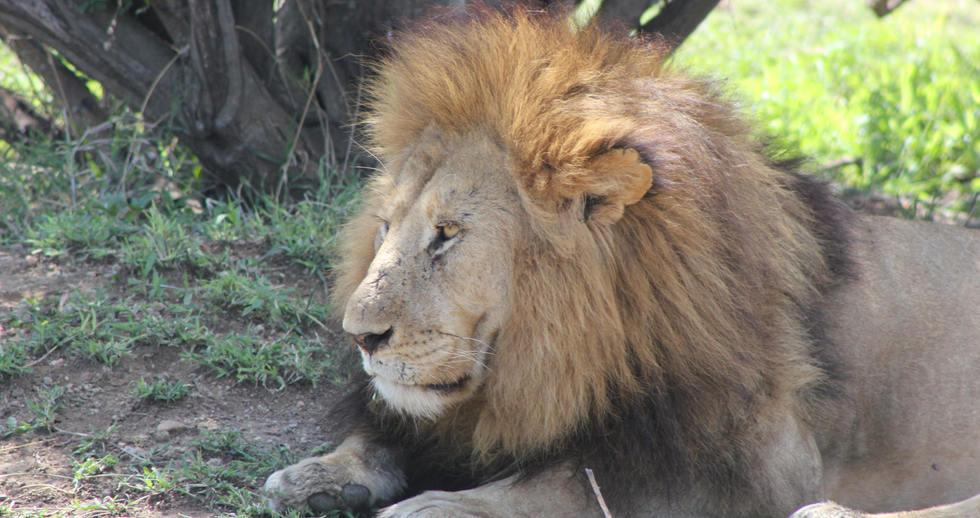 serengeti safari zanzibar (12).JPG
