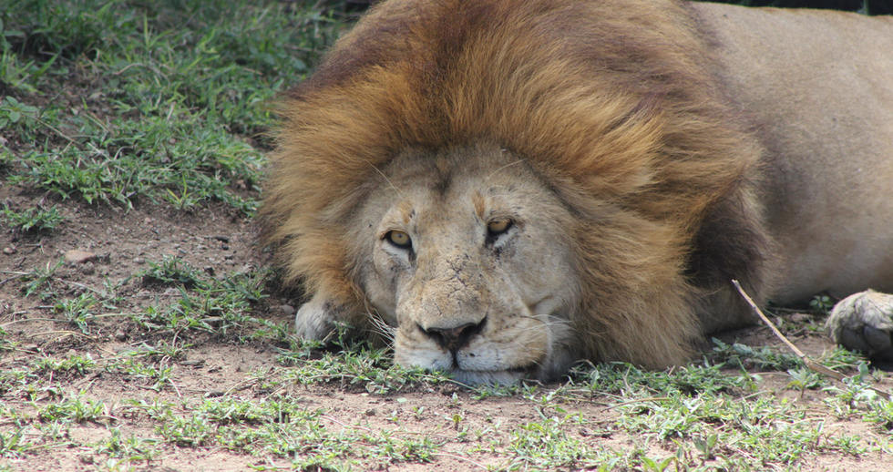 serengeti safari zanzibar (11).JPG