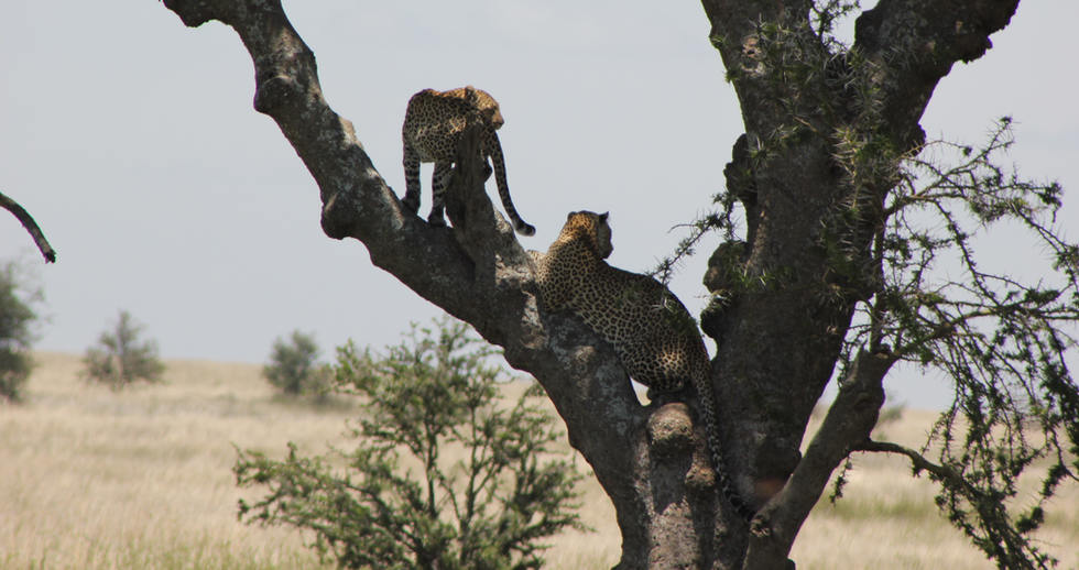 serengeti safari zanzibar (15).JPG