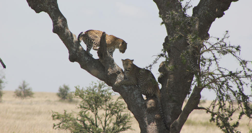 serengeti safari zanzibar (17).JPG