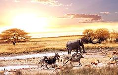 69501201-africa-wallpapers.jpg