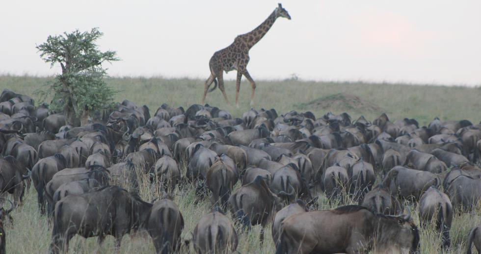 serengeti safari zanzibar (8).JPG