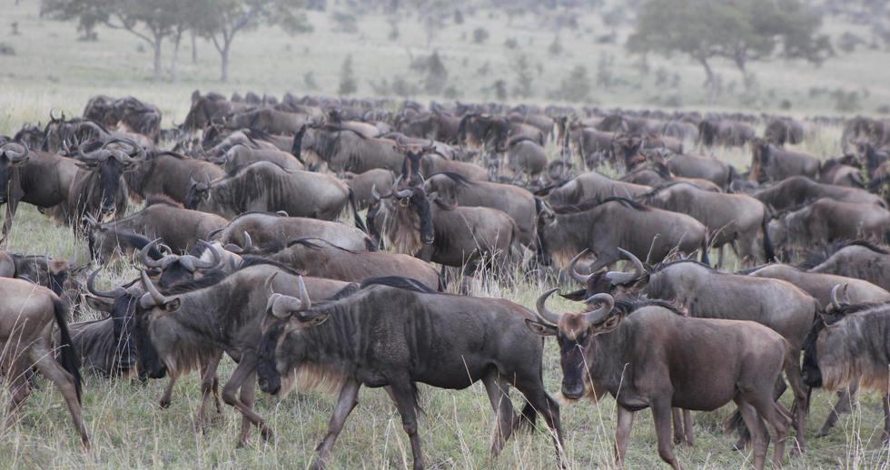 serengeti safari zanzibar (6).JPG