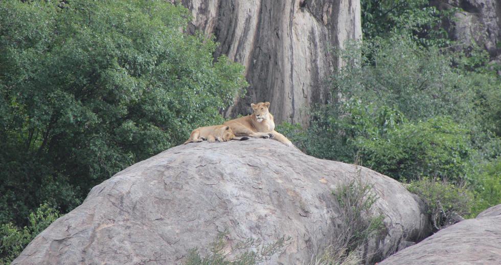 serengeti safari zanzibar (2).JPG
