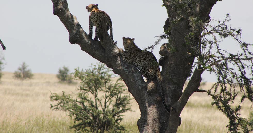 serengeti safari zanzibar (16).JPG