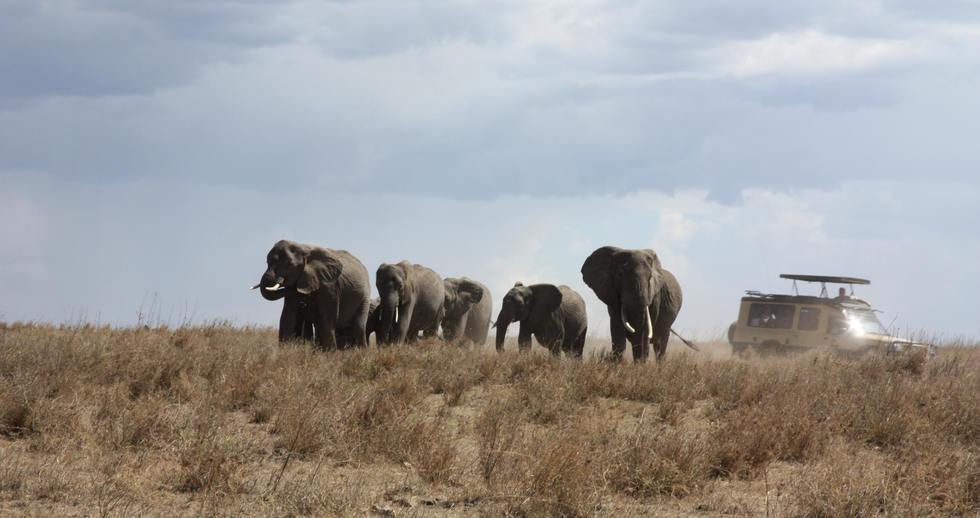 serengeti safari ve zanzibar(23).JPG