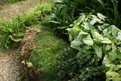 เขียวชอุ่มสวน