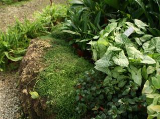 Garden Maintenance Orlando
