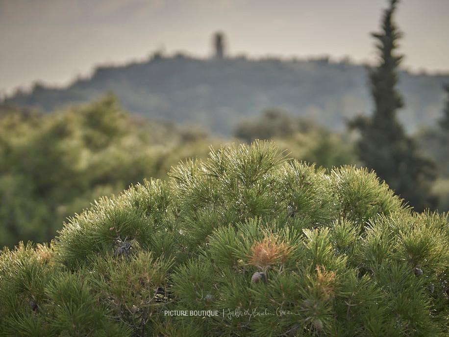 athens-photographer-jeffery-berlin-green