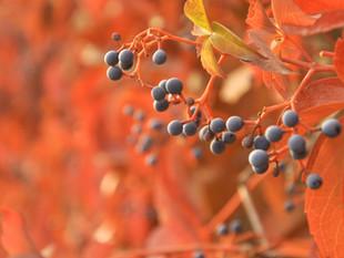 הסתיו בעיניים סיניות
