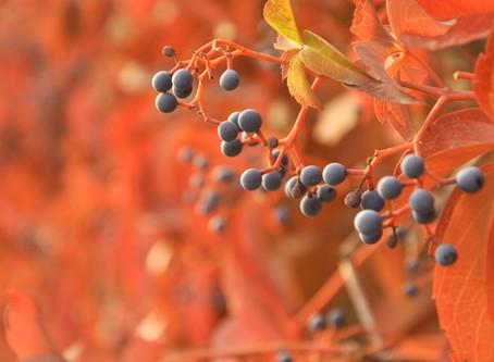 Autumn Air, Autumn Sky, Autumn Yoga