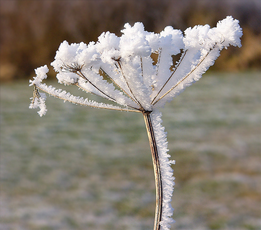Frost porn.