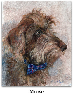 Drawing of wired haired dachshund