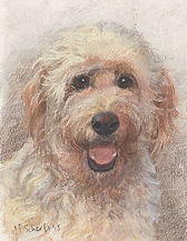 Drawing of Labradoodle