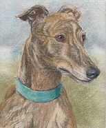 Drawing of Greyhound