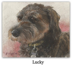 pastel drawing of Aussiedoodle