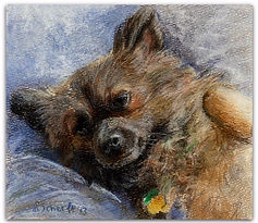 drawing of a chihuahua