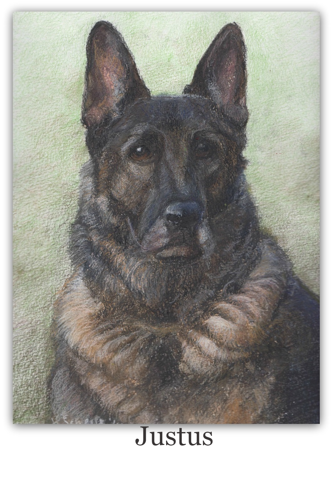 Pastel Drawing of German Shepherd