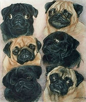Drawing of pugs
