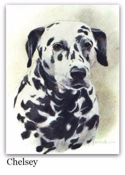 Pastel Drawing of a Dalmation