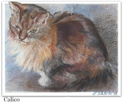 Pastel drawing of cat