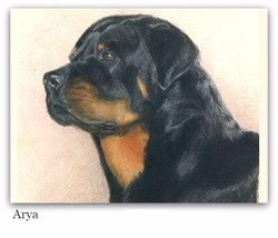 Pastel Drawing of Rottweiler