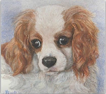 Drawing of king charles spaniel