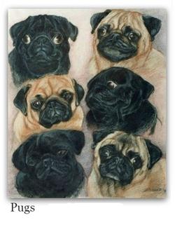 Pastel Drawing of Pugs