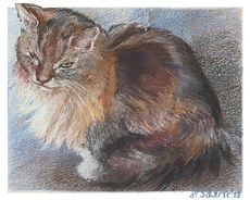 Calico cat drawing