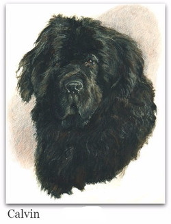 Pastel Drawing of Newfie
