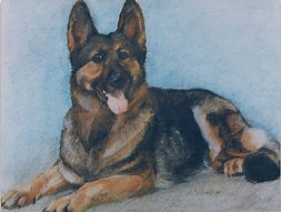 pastel drawing of German Shepherd