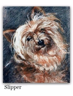 Pastel Drawing of Yorkshire Terrier