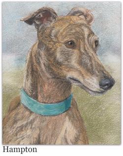 Pastel Drawing of Greyhound
