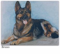 german shepherd pastel drawing _edited