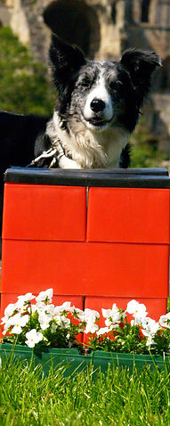 Dog jumps available in any colour and size.