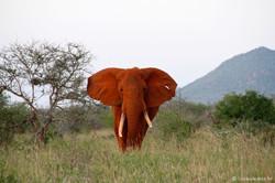 Simba_Village safari 012_marked