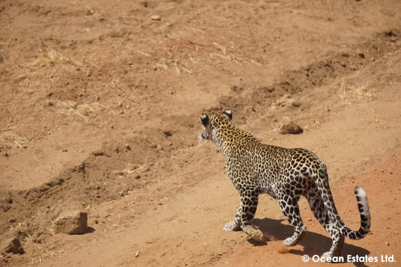 Simba_Village_safari_016