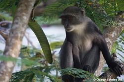 Simba_Village_safari_034