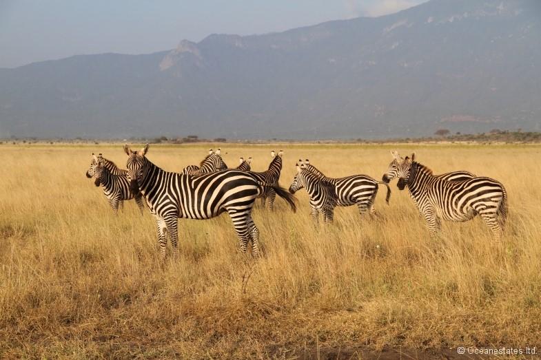 Simba_Village safari 001_marked