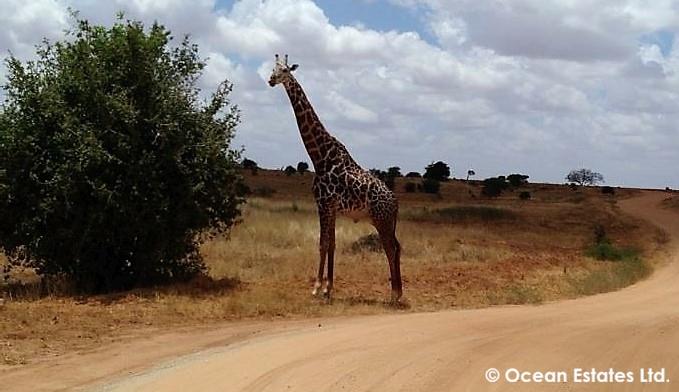 Simba_Village_safari_026