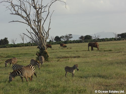 Simba_Village_safari_001