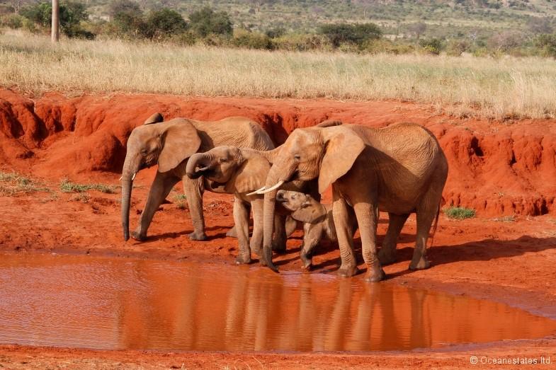 Simba_Village safari 011_marked