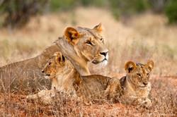 Simba_Village safari 009_marked