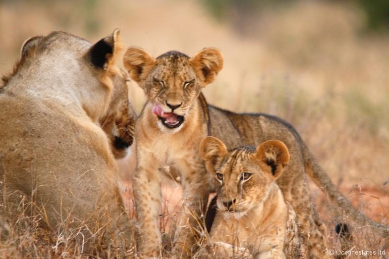 Simba_Village safari 008_marked